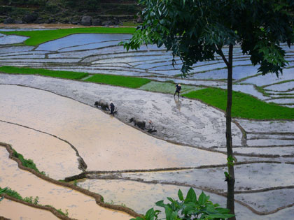 The beautiful terraced rice paddy fields in the countryside surrounding Sapa.<br />